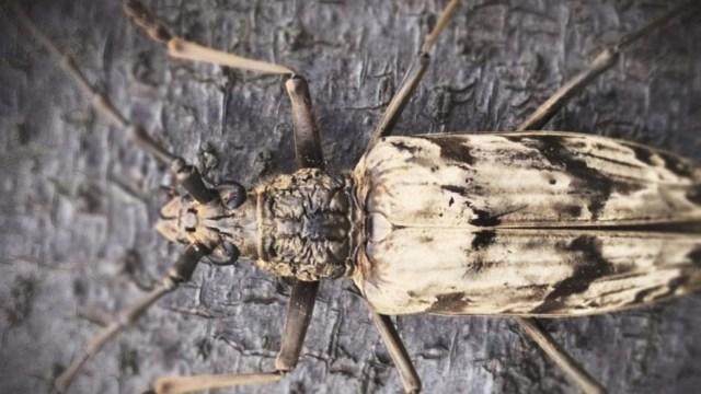 Bu böcek, soğutma teknolojileri için ilham oldu!