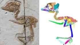 Kuş vücudunda T-Rex kafası: 120 milyon yıllık fosil