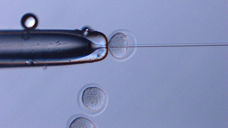 Uzayda dondurulan fare spermleri.