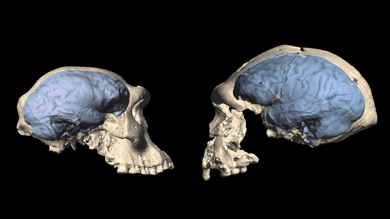 İklim beyin ve vücut boyutunu etkiliyor