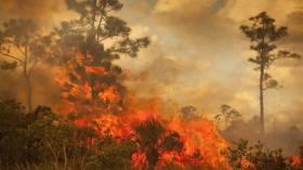 Türkiye'nin orman yangını söndürmede kullandığı teknolojiler