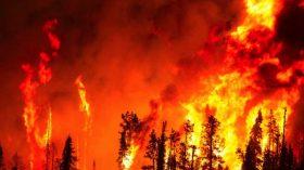 Sosyal medyada ünlüler, orman yangınlarına karşı sessiz kalmadı