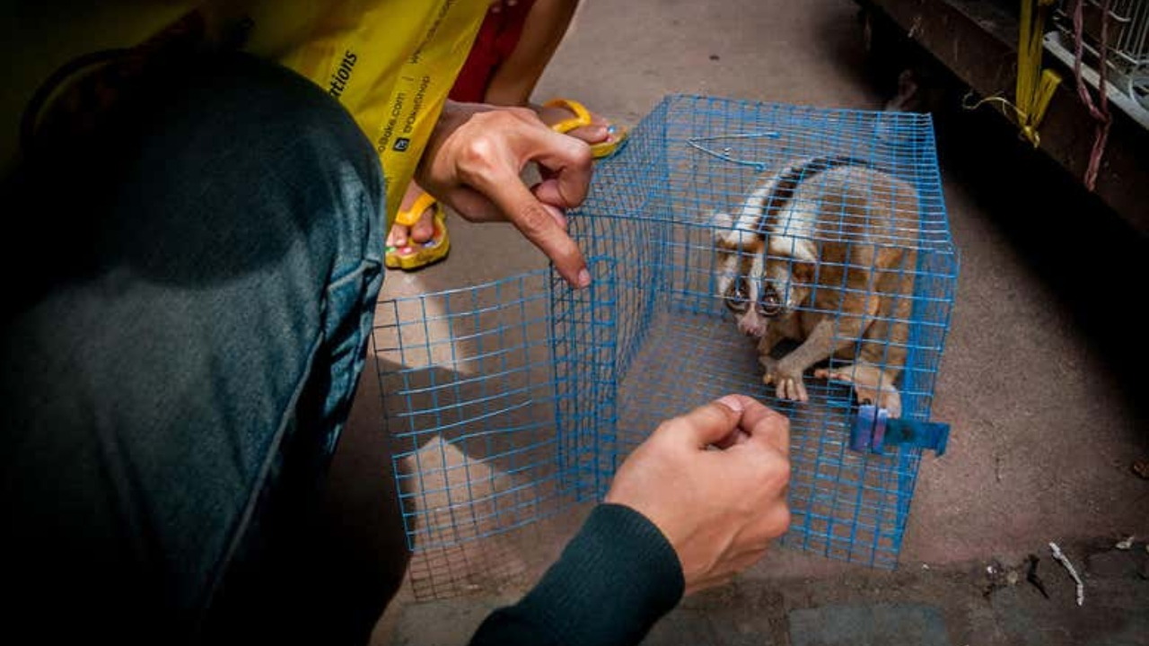 hayvan ticareti ve zoonotik virüsler