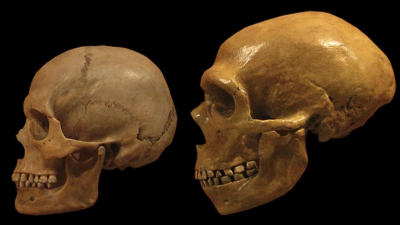 Neandertal ile modern insan