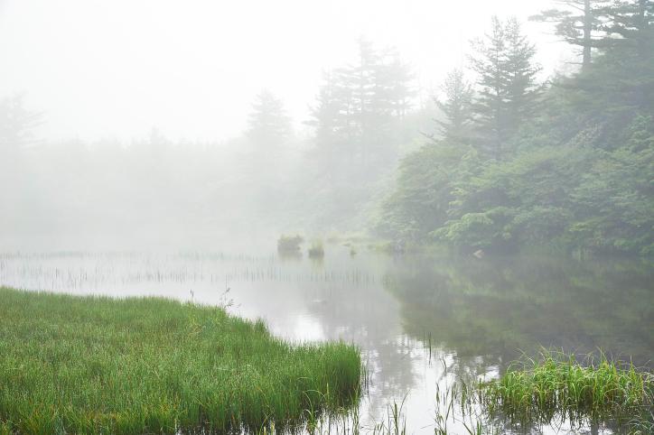 靄の本白根山の富貴原ノ池