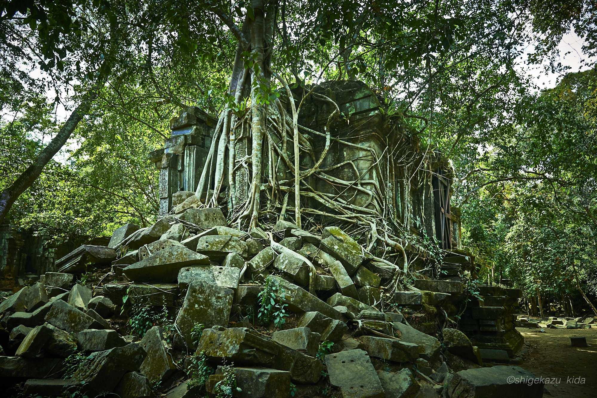Angkor(アンコール)遺跡群にあるBengMealea(ベン・メリア)の木に侵食された経蔵