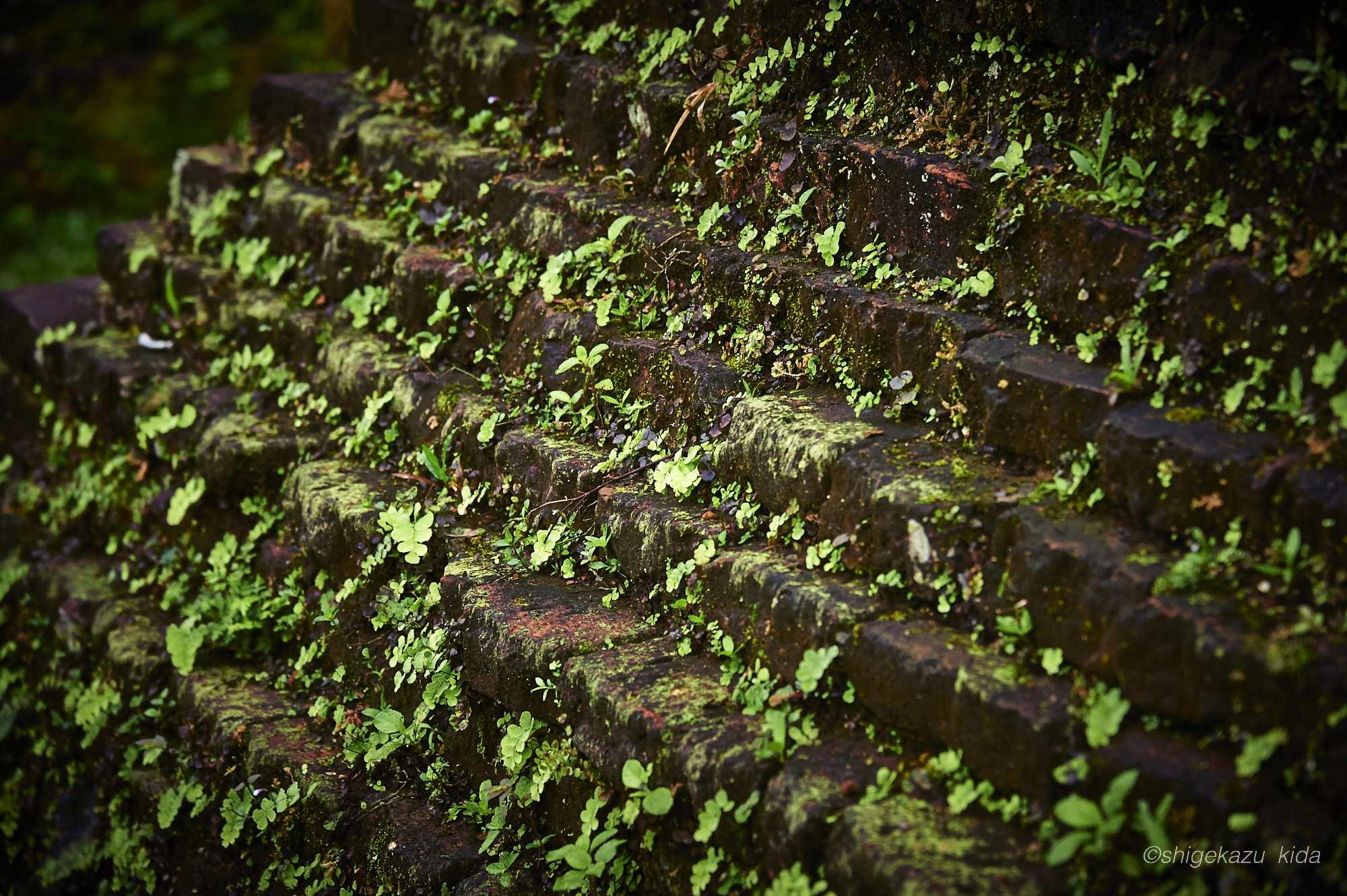 ベトナムMySonSanctuary(ミーソン遺跡)の祠堂のレリーフに生える草