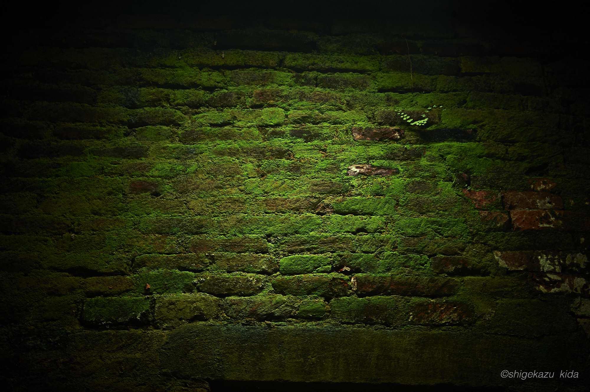 ベトナムMySonSanctuary(ミーソン遺跡)の祠堂内部の苔の壁
