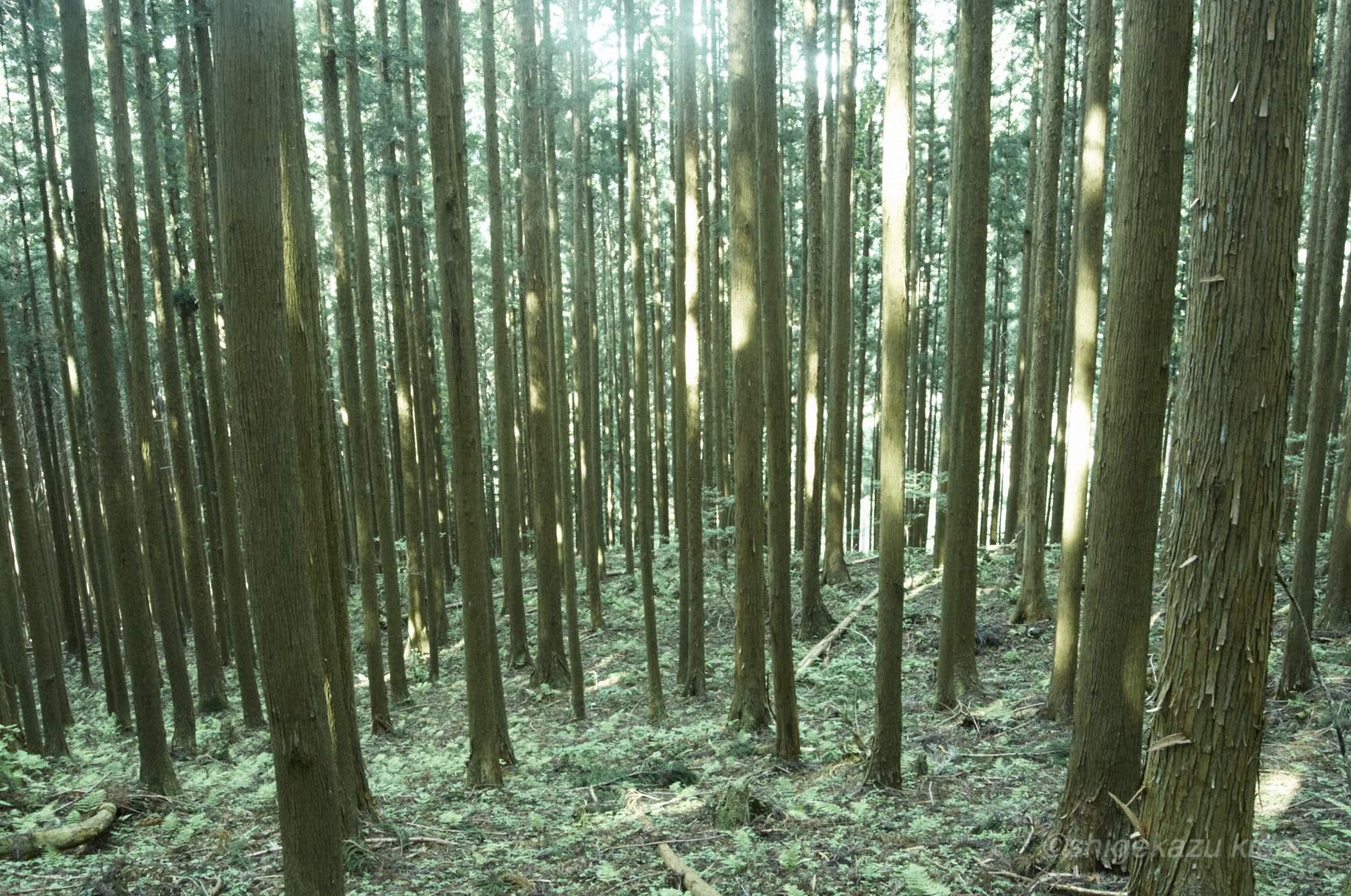 貴田茂和 shigekazu kida 熊野古道の山上ヶ岳