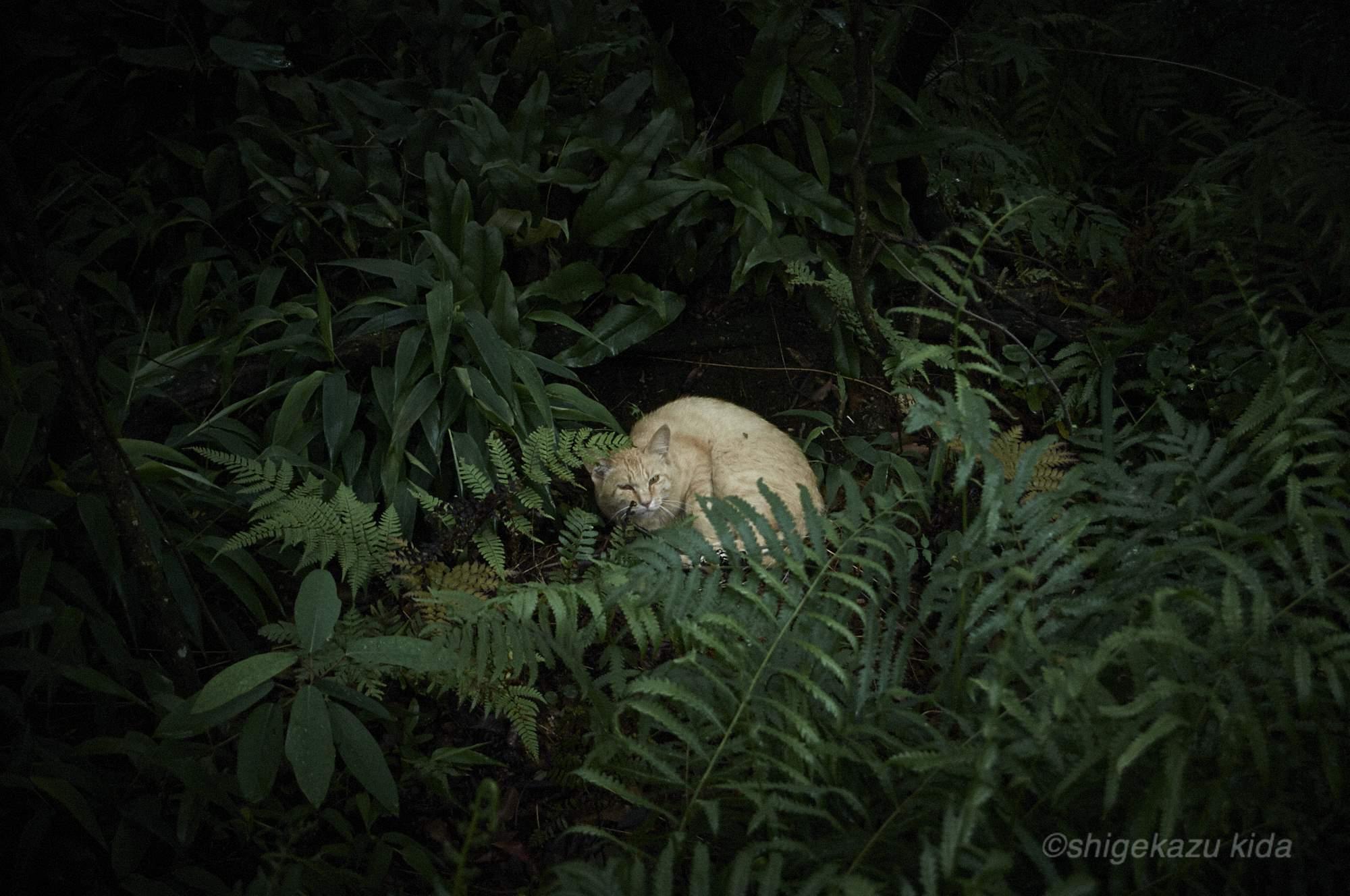 貴田茂和 shigekazu kida 熊野古道の猫