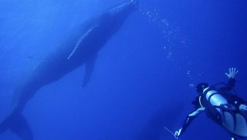 クジラと泳ぐ
