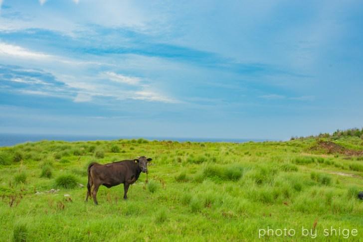 粟国島の観光風景