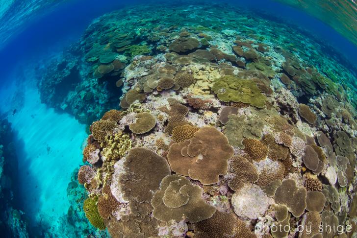 サンゴの写真