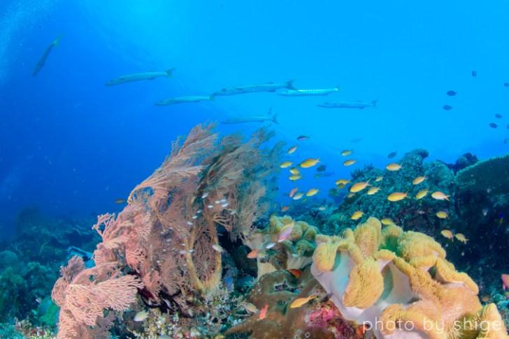 ラジャアンパットのダイビング風景