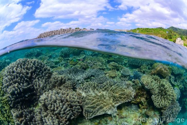 半水面のゴリラチョップの写真