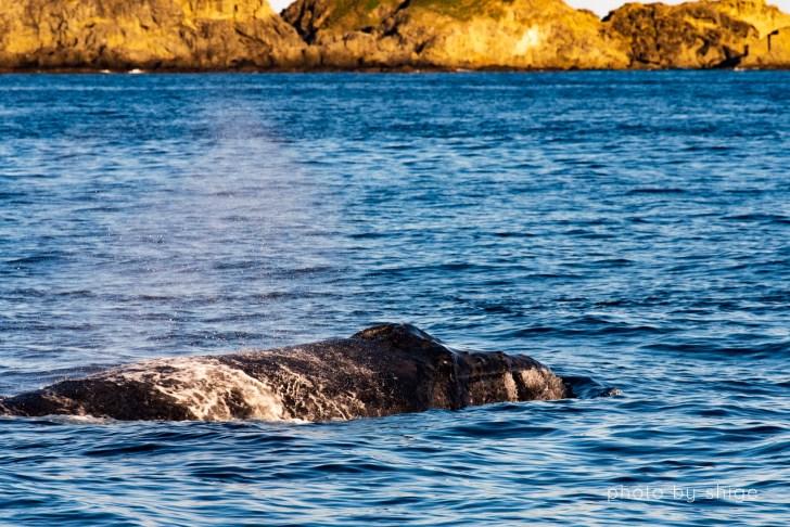 近すぎるザトウクジラのブロー