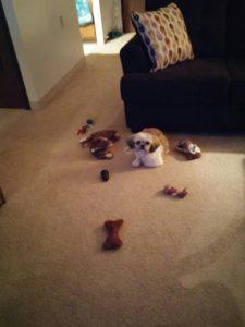Shih Tzu Puppy Treats