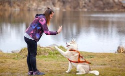 best dog training books for aggression