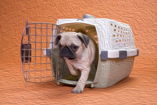 crate training dogs - image of dog coming out of its crate