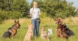 dog training positive reinforcement vs correction