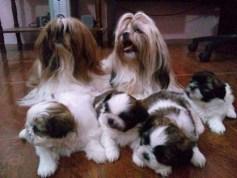 family friendly dog breeds