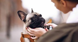 woman holding her french bulldog rescue close