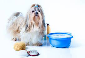 grooming your Shih Tzu