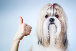know about your shih tzu