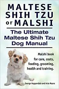 Maltese Shih Tzu price