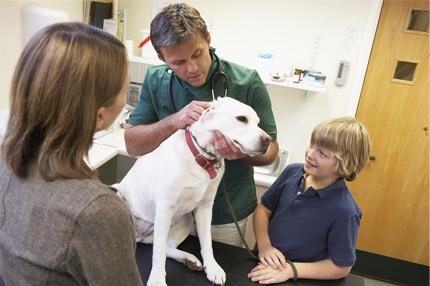 pet insurance comparison