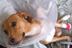 pet insurance comparison for dogs