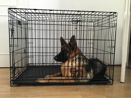 wire dog crate vs. plastic dog crate