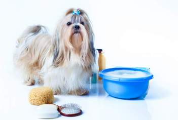 How to find the Best shampoo for Shih Tzu