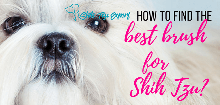 How to find the best brush for Shih Tzu — it's Easier than you think!