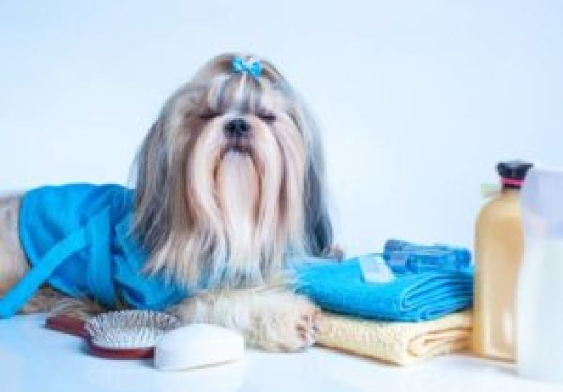 Shih Tzu Cosmetics and Grooming Equipment
