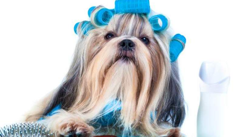 Shih Tzu Leave-in sprays and Conditioners