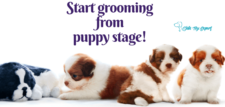 Start grooming from puppy stage!