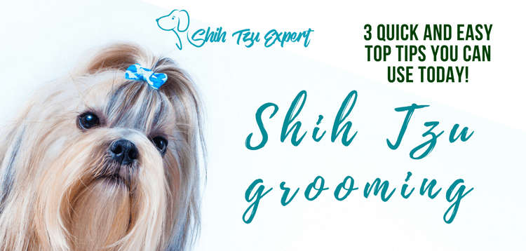 Shih Tzu grooming – Quick and Easy Top tips you can use Today