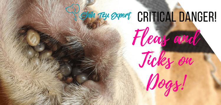 Fleas and Ticks on Dogs