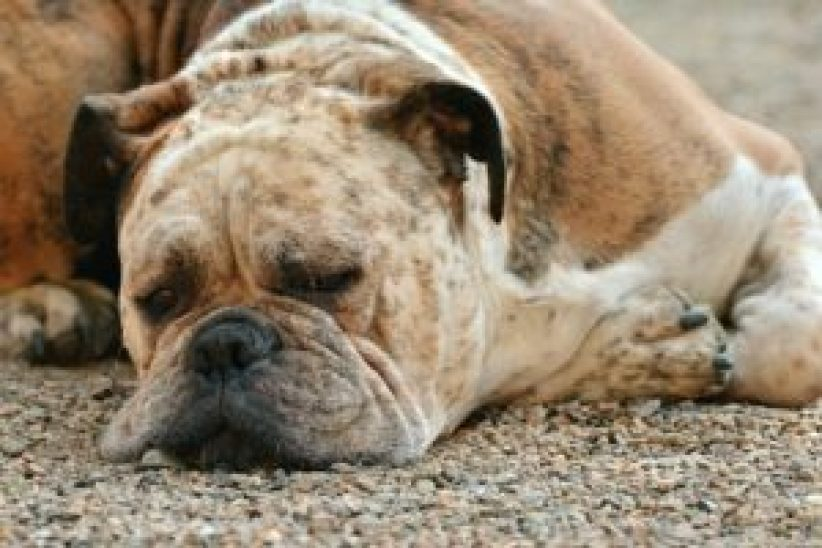 Changes in dog personality and Health problems