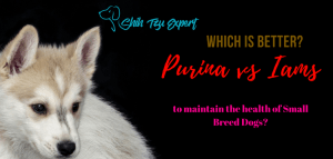 Purina vs Iams : Which is better to maintain the health of Small Breed Dogs?