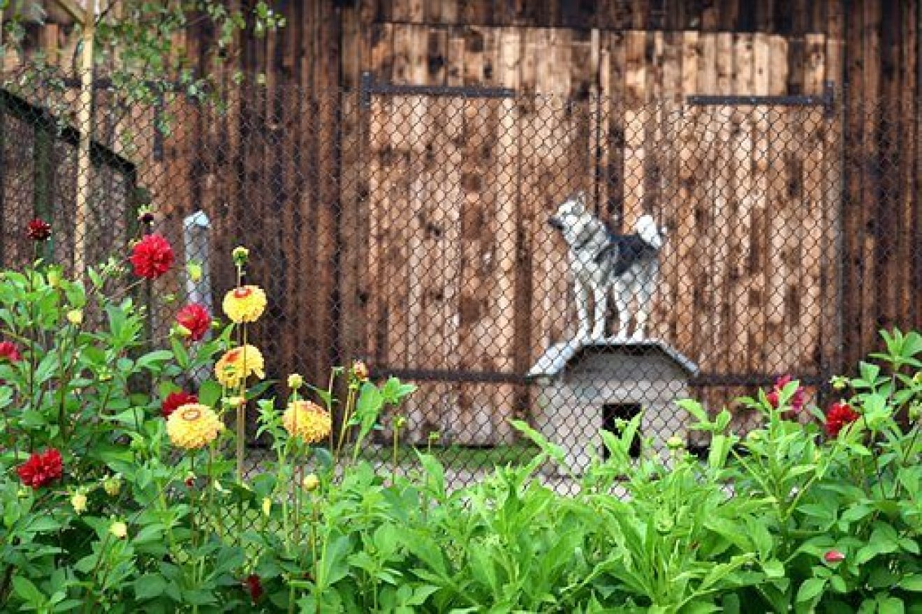 Wireless vs Wired Dog Fence