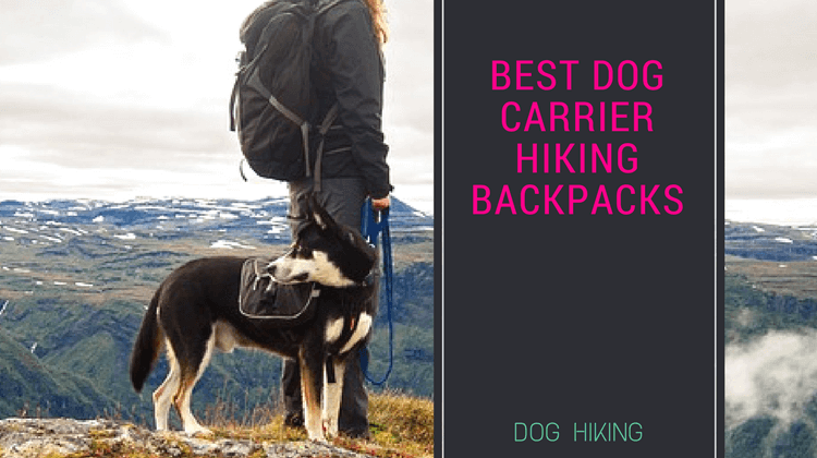 Best Dog Carrier Hiking Backpacks : Your Ultimate guide!