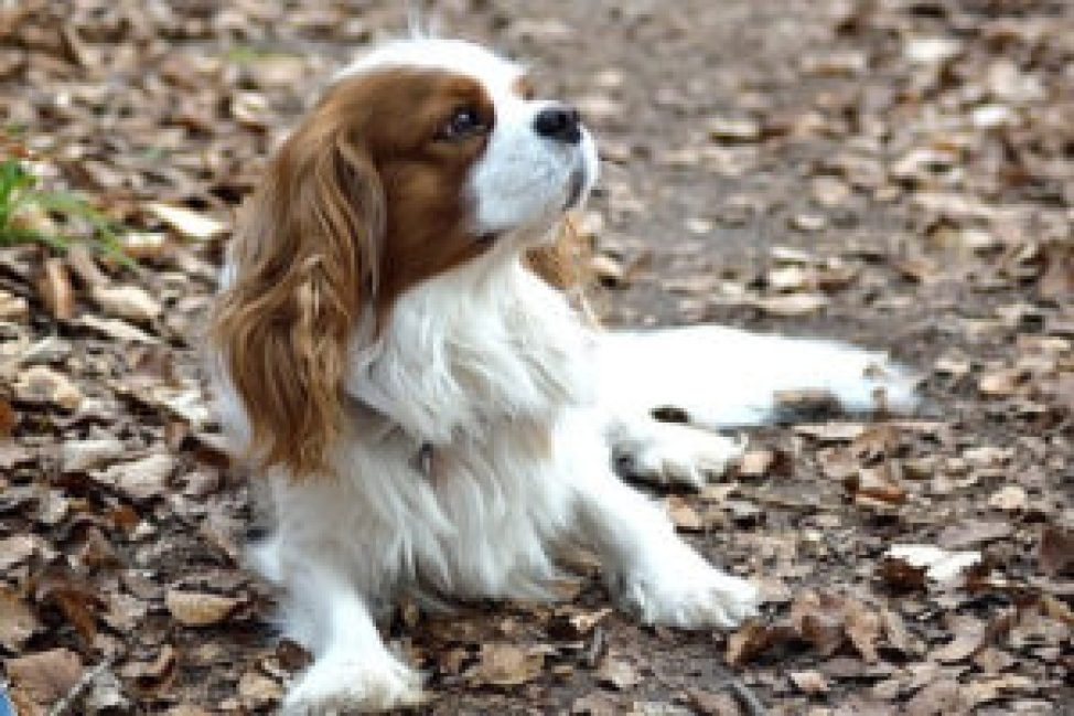 Groom Your Pet Like a Pro: 5 Easy Steps