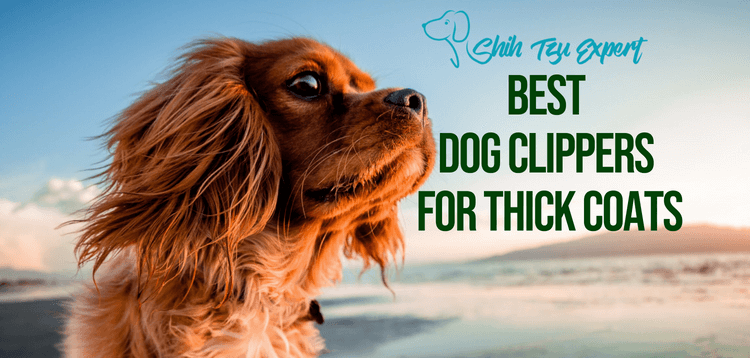 7 Best Dog Clippers for Thick Coats & Hair 2019 [Pick the right one!]