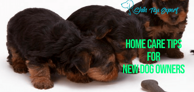 How to Take Care of Your Dog? [Home Care Tips for New Dog Owners]