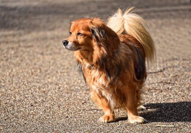 How do I get ready for grooming a dog at home? what do I need?