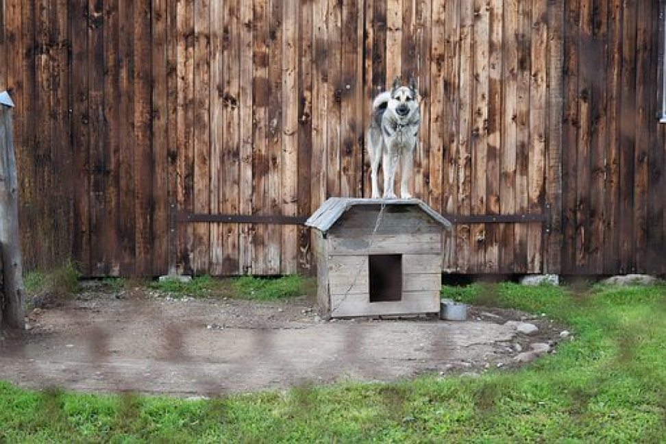 Wireless dog Fences, what they are and how they work.