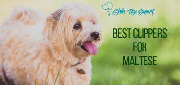 Best Clippers for Maltese