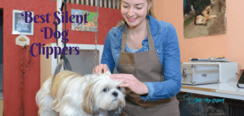 Best Silent Dog Clippers